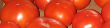 cropped-farm-photos-5-27-08-032-b.jpg