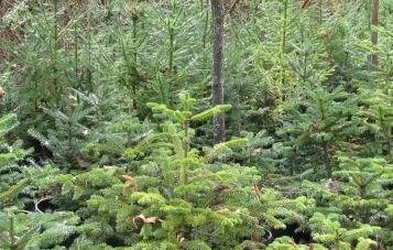 tabletop trees 11-2013 005 b